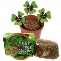 Vypěstujte si čtyřlístek - květináč