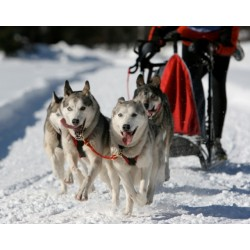 Mushing - jízda se psím spřežením