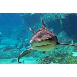Potápění se žraloky
